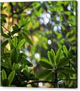 Lush Rhododendron Forest Canvas Print