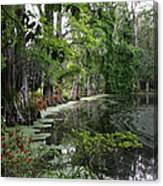 Lush Swamp Vegetation Canvas Print