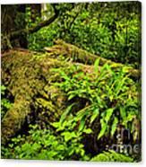 Lush Temperate Rainforest Canvas Print