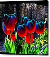 Lustrous Tulips Canvas Print