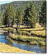 Lyell Canyon Canvas Print