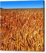 Lying In The Rye Canvas Print