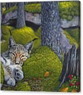 Lynx In The Sun Canvas Print