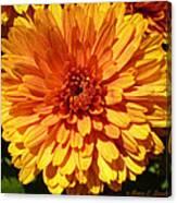 M Bright Orange Flowers Collection No. Bof7 Canvas Print