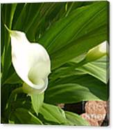 M White Flowers Collection No. W5 Canvas Print