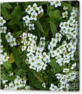 M White Flowers Collection No. W6 Canvas Print