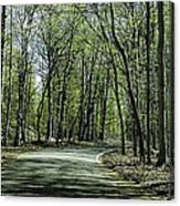 M119 Tunnel Of Trees Michigan Canvas Print