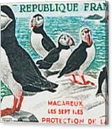 Macareux Seven Islands Conservation Canvas Print