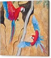 Macaw Claylick Canvas Print