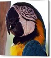 Macaw Head Study Canvas Print