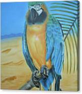 Macaw On A Limb Canvas Print