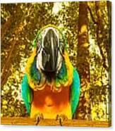 Macaw Parrot Canvas Print