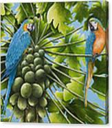 Macaw Parrots In Papaya Tree Canvas Print