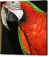 Macaw Profile Canvas Print
