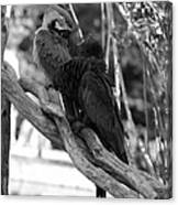 Macaws Of Color B W 15 Canvas Print