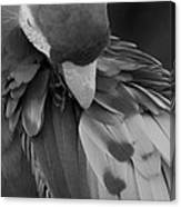Macaws Of Color B W 16 Canvas Print