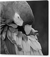 Macaws Of Color B W 17 Canvas Print