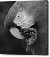 Macaws Of Color B W 18 Canvas Print