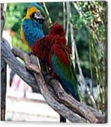 Macaws Of Color24 Canvas Print