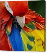 Macaws Of Color25 Canvas Print