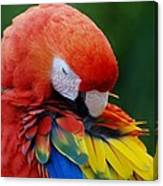 Macaws Of Color26 Canvas Print