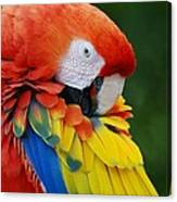 Macaws Of Color28 Canvas Print