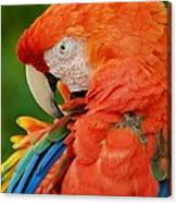 Macaws Of Color29 Canvas Print