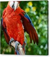 Macaws Of Color30 Canvas Print