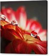 Macro Drops Canvas Print