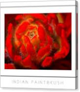 Indian Paintbrush Poster Canvas Print