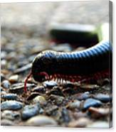 Macro  Millipede Canvas Print