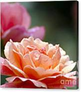 Macro Orange And Pink Floribunda Rose Canvas Print