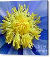 Macro Photograph Of  Blue Waterlily Canvas Print