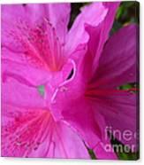 Macro Purple Azalea Flower Canvas Print