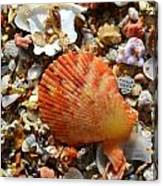 Macro Shell On Sand Canvas Print