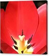 Macro Tulip 2 Canvas Print
