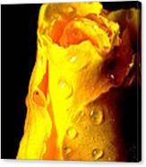 Macro Yellow Rose 2 Canvas Print