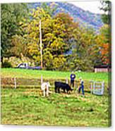 Mac's Farm In Balsam Grove 2 Canvas Print