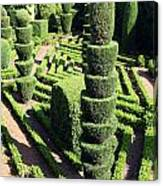 Madeira Botanic Gardens Topiary Canvas Print