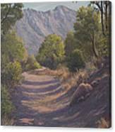 Madera Canyon Canvas Print