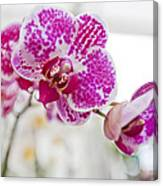 Magenta Ears Orchid Canvas Print