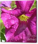 Magenta Majesty Canvas Print