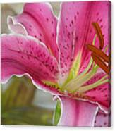 Magenta Tiger Lily Canvas Print