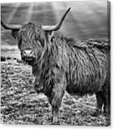 Magestic Highland Cow Canvas Print