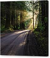 Magic Of Redwood Canvas Print