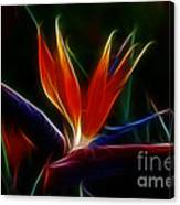 Magical Bird Of Paradise Canvas Print