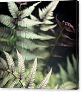 Magical Forest 1 Canvas Print
