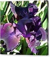 Magical Purple Iridescent  Iris Canvas Print