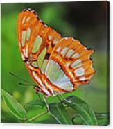 Magnificently Majestic Malachite Canvas Print