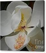 Magnolia 14-3 Canvas Print